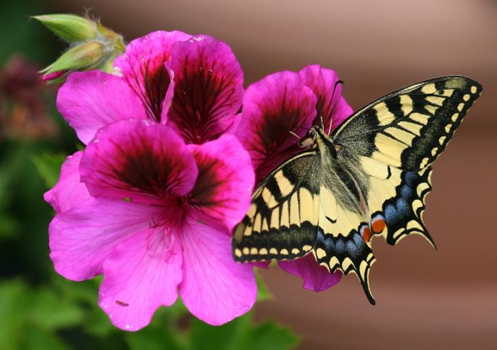 Sul fiore di ALE812311