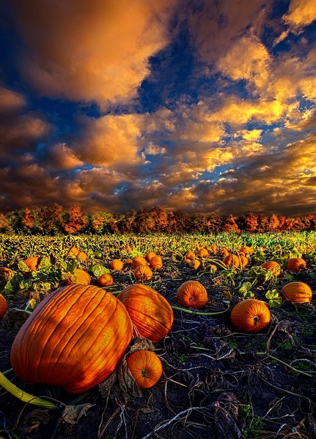 Pumpkin Crossing by Phil Koch - Landscapes Prairies, Meadows & Fields ( pumpkin, halloween, pumpkins, Thanksgiving Challenge, , fall, color, colorful, nature )