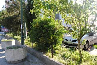 Photo: Pexegueiro, Evónimo e Ciprés