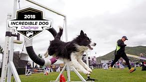 2018 Incredible Dog Challenge thumbnail