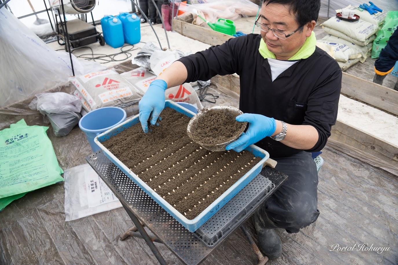配置した種の上に土を柔らかく被せます