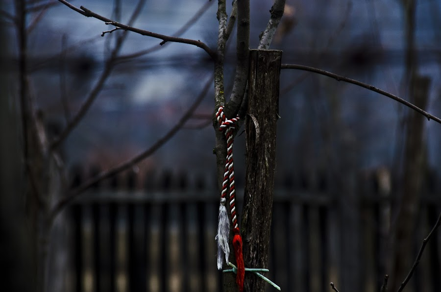 The Symbol by Andreea Alexe - Artistic Objects Other Objects ( bokeh background, detail, tree silhouette, tree branch, red ribbon, fence garden, closed aperture )