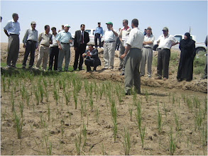 Photo: Farmers discuss proper SRI methods, 2010 [Photo provided by  Khidir A. Hammed]