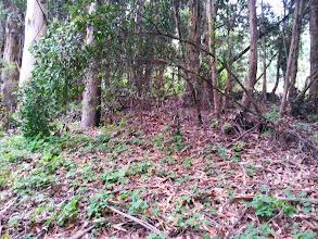 Photo: Eucalyptus, poison oak, and bay trees.