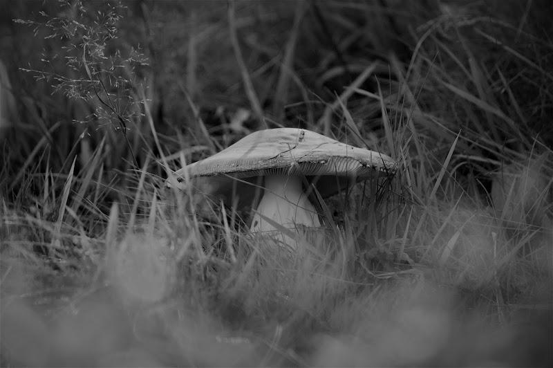 Nascono come funghi di Sara_Monaco