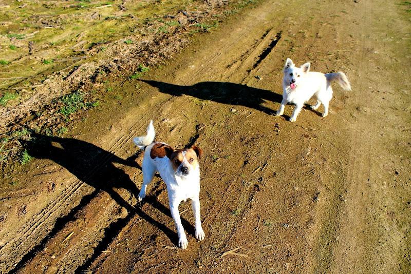 Ombre canine di Bobo