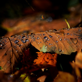 Autumn leaves by Michaela Firešová - Nature Up Close Leaves & Grasses ( colour, leaves, autumn )