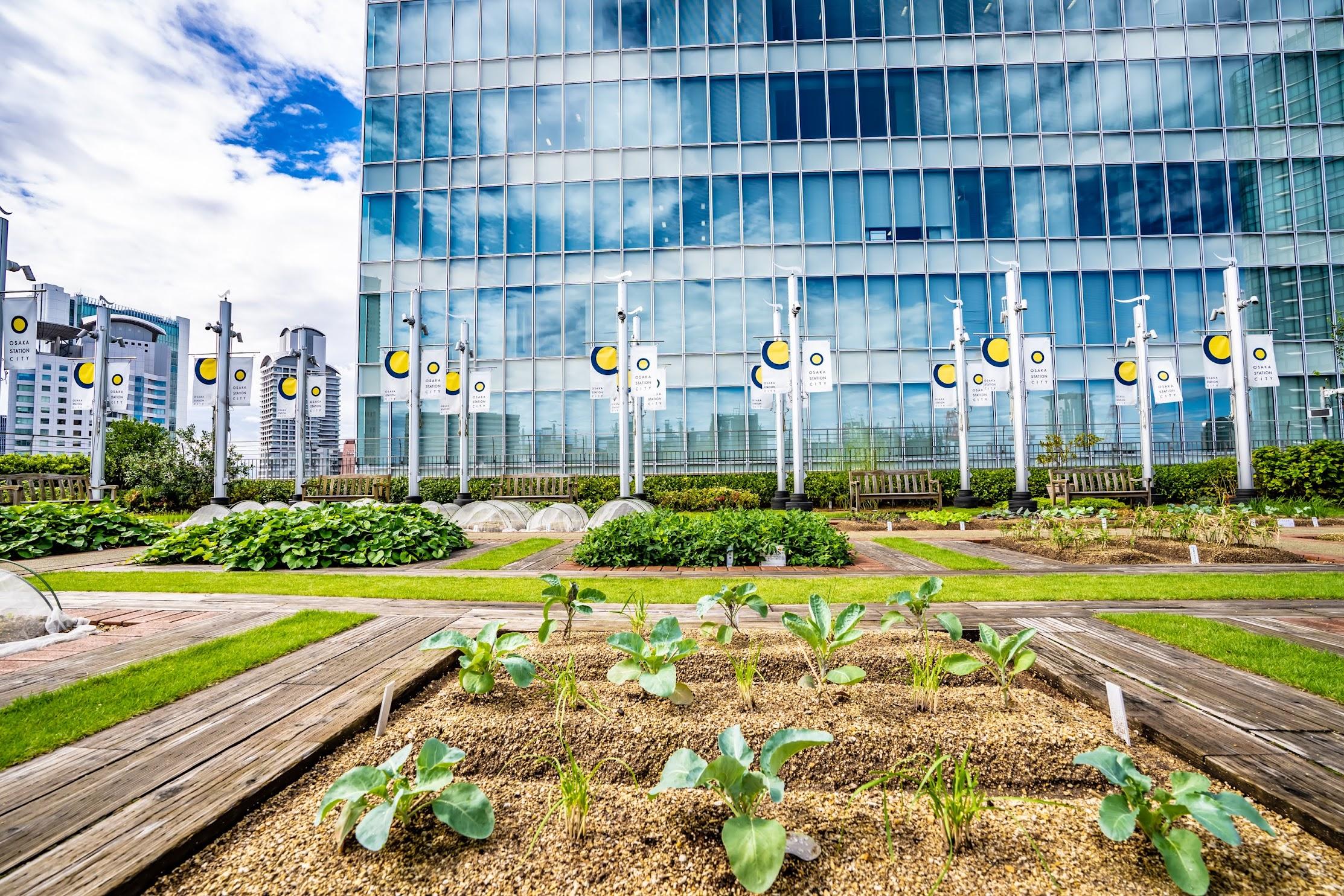 大阪ステーションシティ 天空の農園3