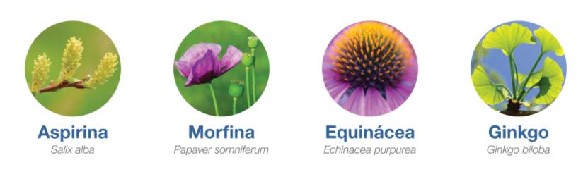 Plants in medicines