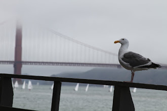 Photo: The seagulls are the other watchful spectators in the bay.
