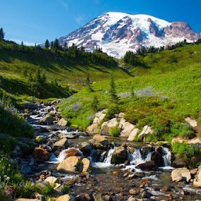 Mt Rainer at Paradise by Steve Fisher - Landscapes Waterscapes ( Water,  )