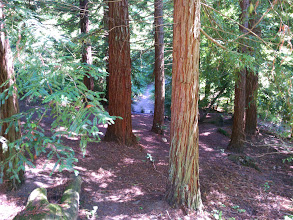 Photo: This redwood grove is the crown jewell.