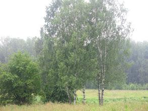 Photo: Дождливое утро