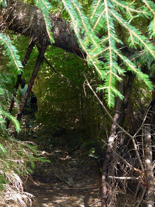 Пътека през гората в Родопите