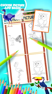 Ptačí omalovánky - náhled