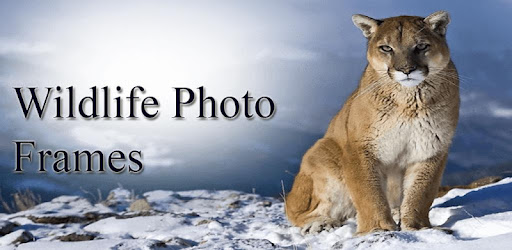 Wildlife Photo Frames - Apps on Google Play