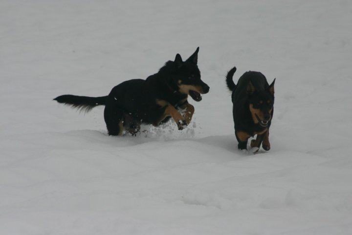 Snow and dogs... di skeepy