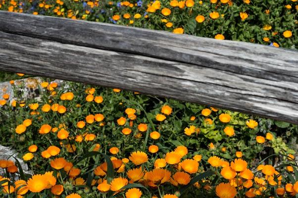früjahr in orange di TS_73
