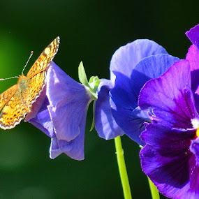 Purple Passion  by Lyn Daniels - Flowers Flower Gardens