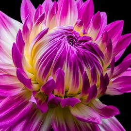 by Darren Sutherland - Flowers Single Flower