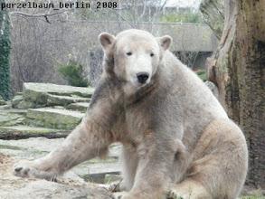 Photo: Knut praesentiert sich nett gefaerbt ;-)