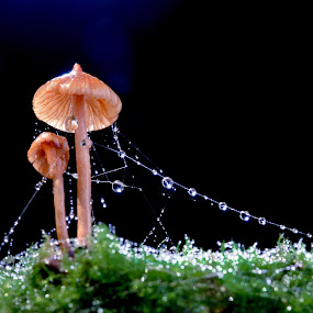 Christmush by Tuan Pham - Nature Up Close Mushrooms & Fungi ( drop, moss, water drop, forest, wet, vietnam, mushroom )