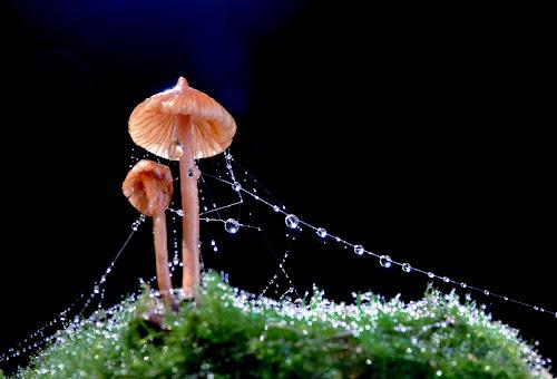 Christmush by Tuan Pham - Nature Up Close Mushrooms & Fungi ( drop, moss, water drop, forest, wet, vietnam, mushroom )