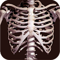 Osseous System in 3D (Anatomy) icon