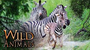 Wild About Animals thumbnail