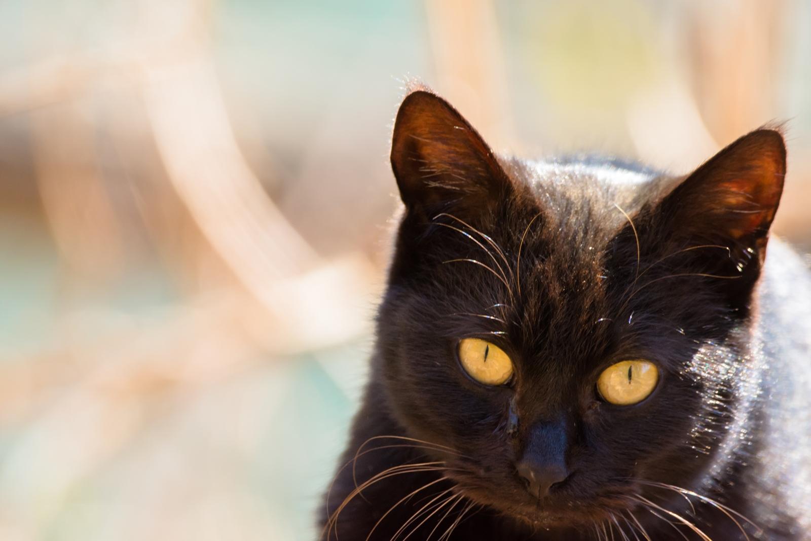 Photo: 狙いを定めて / Aim at.  じっと見つめて 行くよ行くよ その時を狙って チャンスをうかがう  Stray cat. (ノラ猫)  Nikon D7200 SIGMA 150-600mm F5-6.3 DG OS HSM Contemporary  #cat #straycat #kawaii #nikon #sigma #木曜ポートニャート  ( http://takafumiooshio.com/archives/856 )