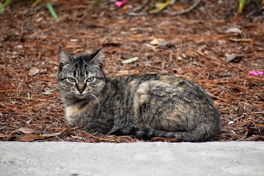 Stray  by Matthew Robert - Animals - Cats Portraits
