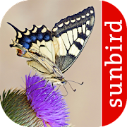 App Icon for Butterfly Id - British Isles App in Czech Republic Google Play Store