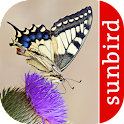 Butterfly Id - British Isles icon