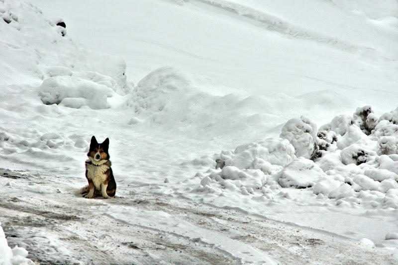 la sua prima neve di ruggeri alessandro