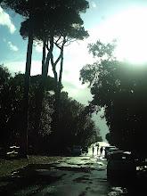 Photo: Come sono piccin confronto  le persone in confronto ai pini