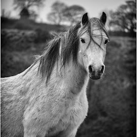 by David Bevan - Black & White Animals