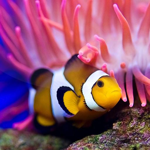 Ocean Fish Live Wallpaper 🐠 Animated Aquarium