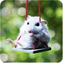 Hamster Puzzle Jigsaw for Kids