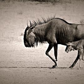 Mom & I by Pieter J de Villiers - Black & White Animals