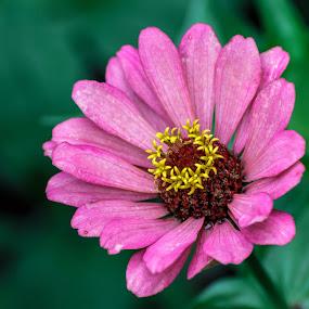 by Diogo Ferreira - Flowers Single Flower