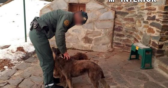 Investigan un delito de protección de la flora, fauna y animales domésticos