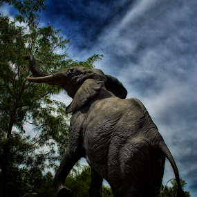 Dusky Elephant by Bill Tiepelman - Animals Other ( sculture, zoo, elephant )