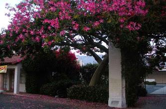Photo: Flower Deadfall Santa Barbara 2012