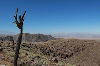 Photo: Cactus en el crater Volcan Nicholson