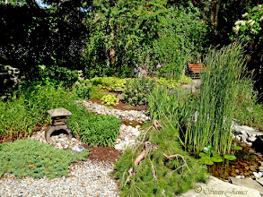 Photo: This Asian-influenced garden has a peaceful feel with it's pond, weeping Ponderosa pine and Japanese statuary.