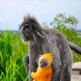 by Alvin Cheah - Animals Other Mammals ( pwcbabyanimals )