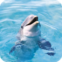 Dolphins Pack 2 Live Wallpaper icon