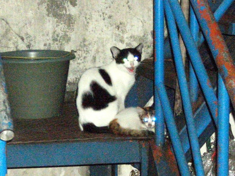 Keluarga Kucing: Ibu-Anak