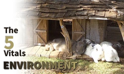 5 Vitals of Environment