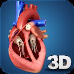 Heart Anatomy Pro. 1.4